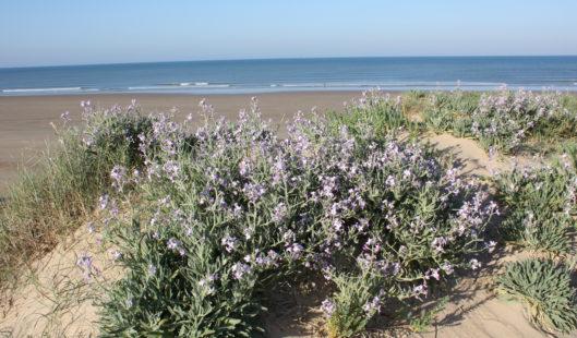 Flore de Dune - Parenthèse Océan Voyages