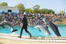 Spectacle des dauphins Planète Sauvage - Parenthèse Océan Voyages